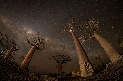 baobabs Madagascar milky way-7814 copy.j