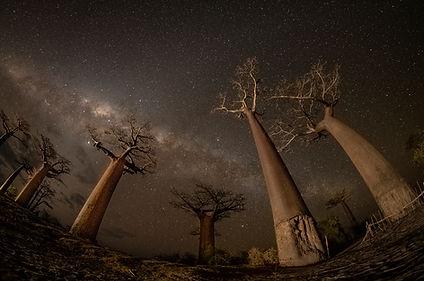 Madagascar Wildlife Photography Safari Trai Anfield baobabs milky way