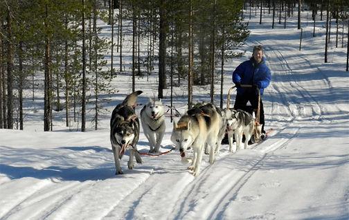 Finland Photography Safari_Trai Anfield Photography husky dog sledding