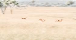 Dreaming of Impala