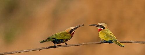 The Aviary #1 bee eater offering