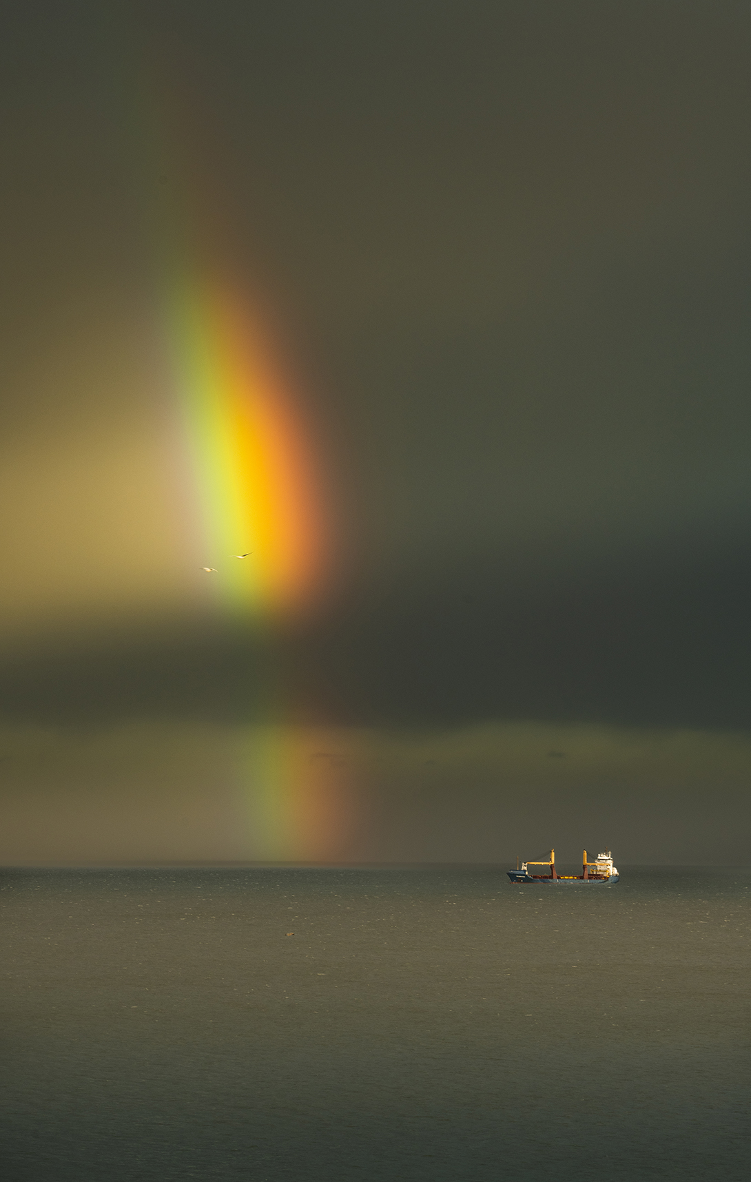 rainbow ship and gulls-9813_WEB