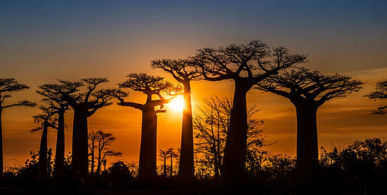 baobabs Madagascar sunset-7605.jpg