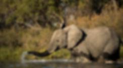trai anfield photographic safaris -6616.