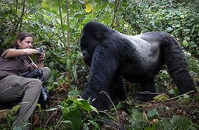 Trai gorilla Christina Gates.jpg