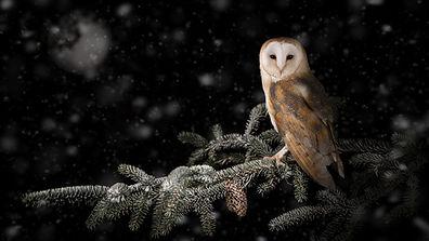 XMAS OWL SNOW.jpg