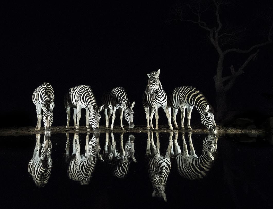 Dark Wall Zebra Reflections.jpg