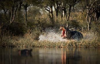 trai anfield photographic safaris -6469.