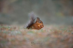 Trai_Anfield_Enlightened_Photographic_Sa