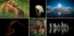 safaris comp.jpg