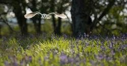 barn owl_DSC1906-2.jpg
