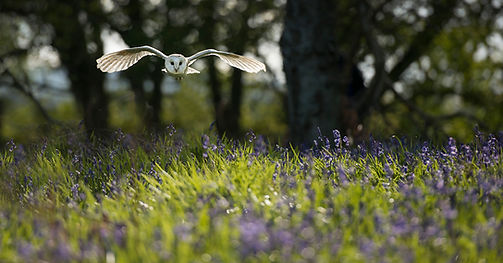 Raptors workshop image barn owl