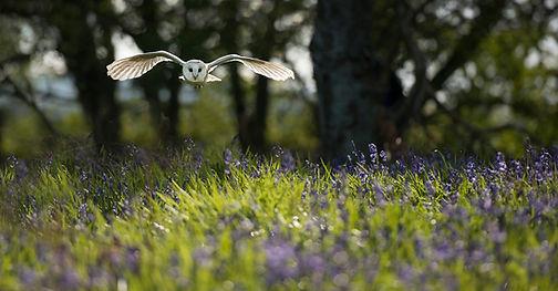 Raptors workshop image barn owl