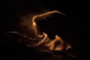 lion kill night, Zimanga-1324_WEB.jpg