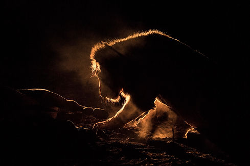 lion kill night, Zimanga-1324_WEB.jpg