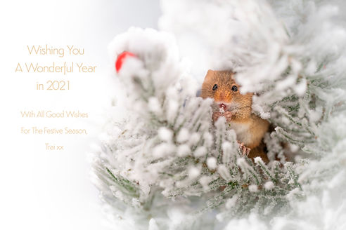 Trai Anfield harvest mouse eating snow x