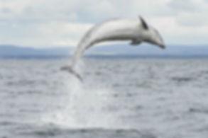 dolphin STOCK.jpg