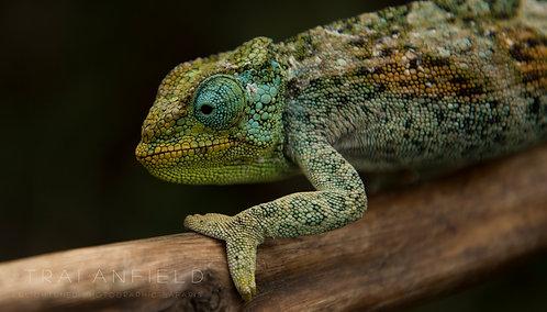 Wildlife Photography: Macro, Mini & Exotic 12 APRIL