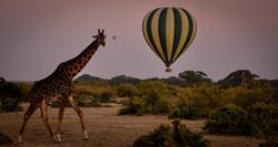Trai_Anfield_enlightened_media_hawks_head_photography-Maasai Mara Kenya.jpg