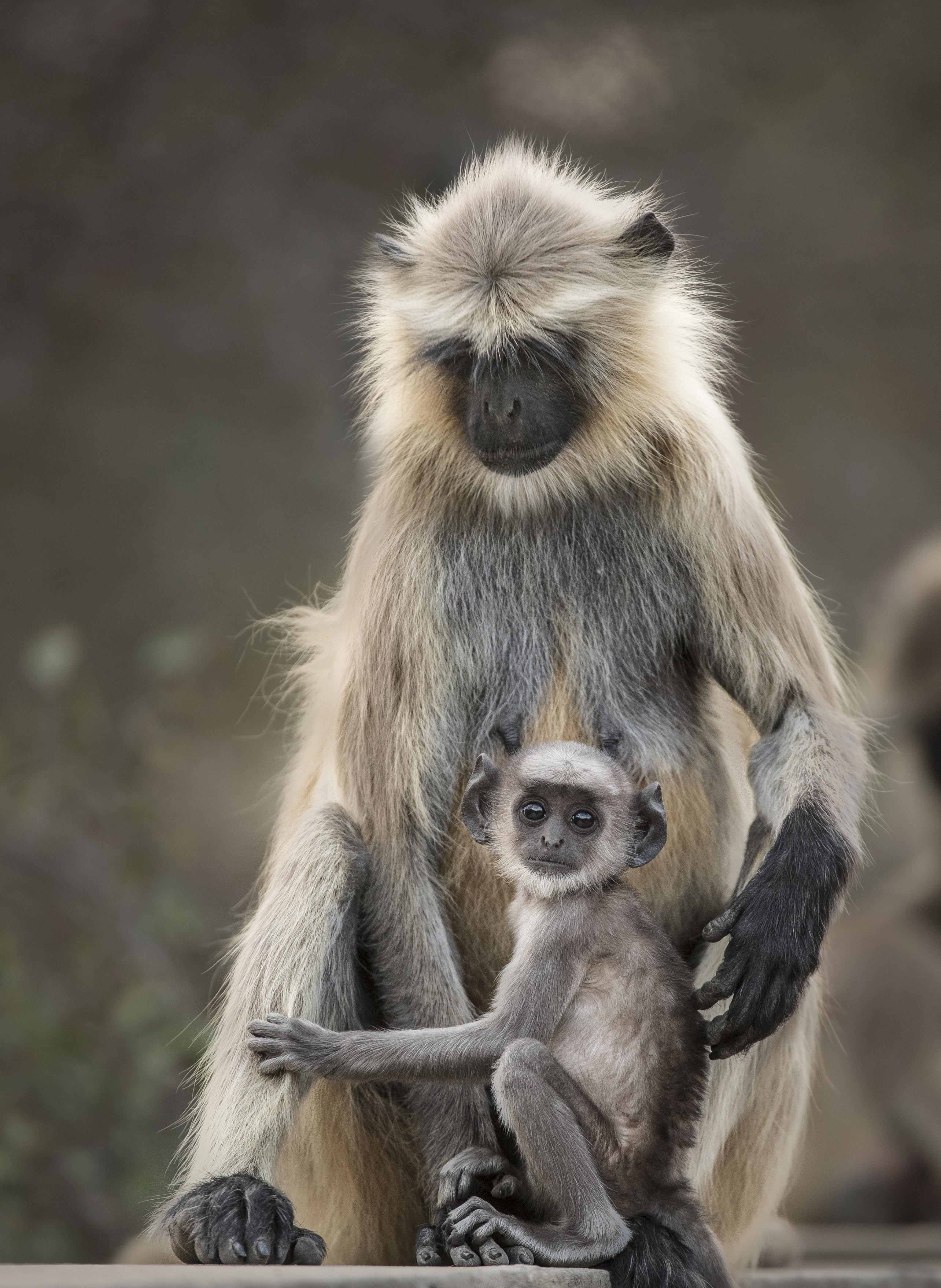 monkeys for Emma_7545_7606.jpg
