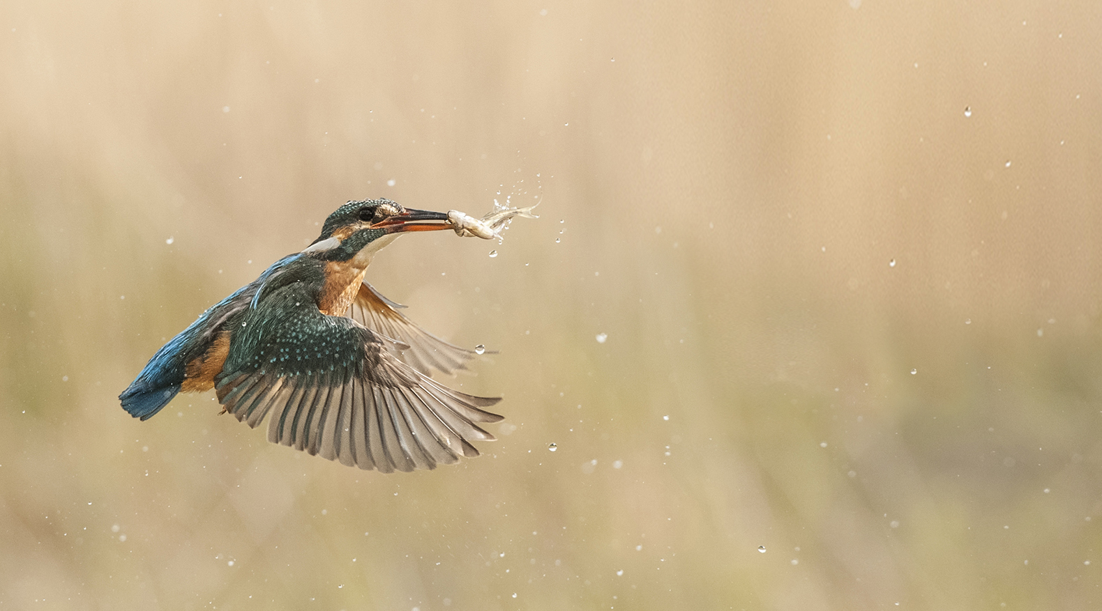 kingfisher3-8697.jpg