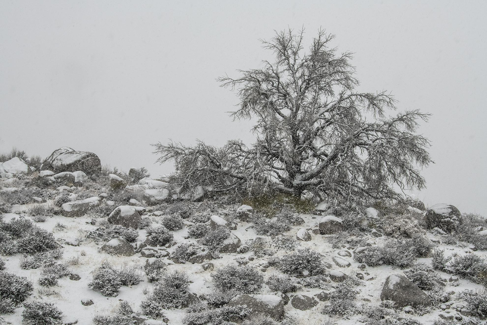 Alabama hills snowy-2368