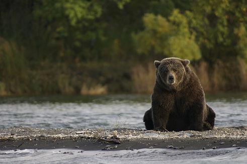 bear-2095379_1920.jpg