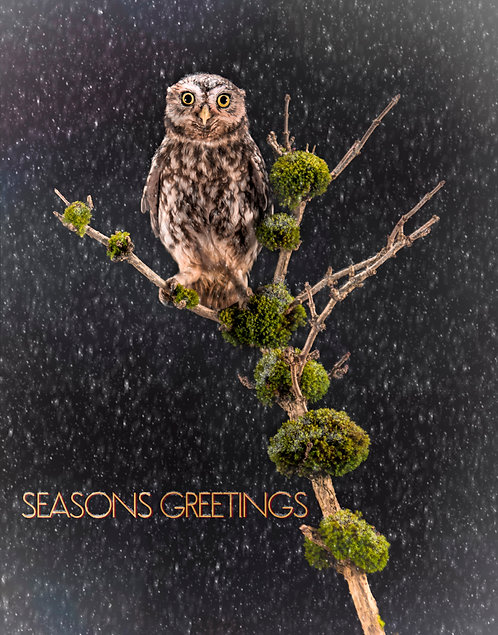 Seasonal Greeting Cards Workshop Saturday 24 October