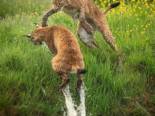 UK Wildlife Photography Safari – A Revelation!