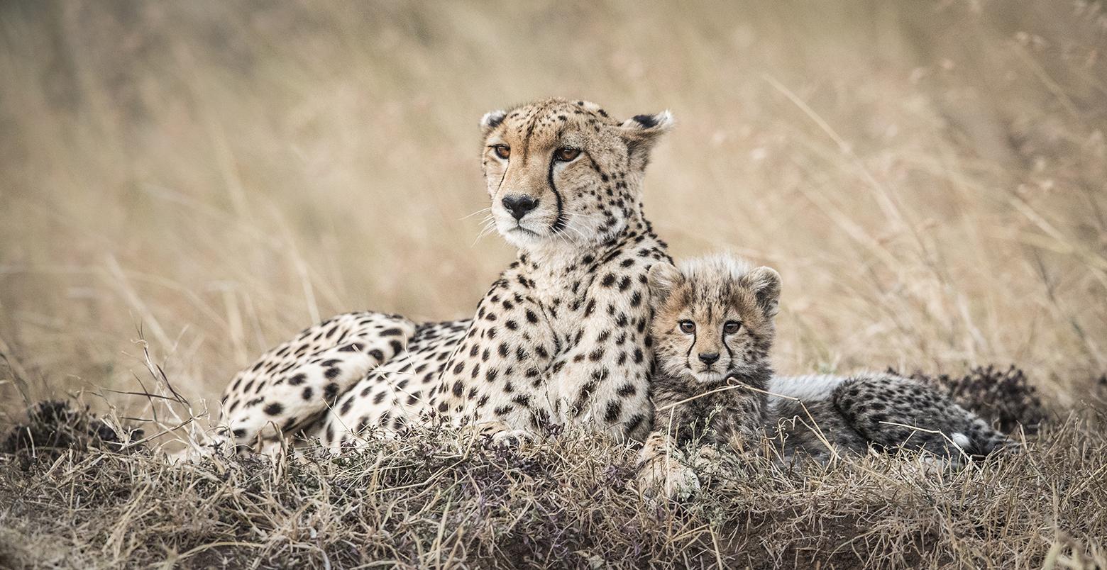 trai anfield photographic safaris -3596_