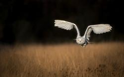 Tatra BoP snowy owl EDIT-4044_WEB.jpg