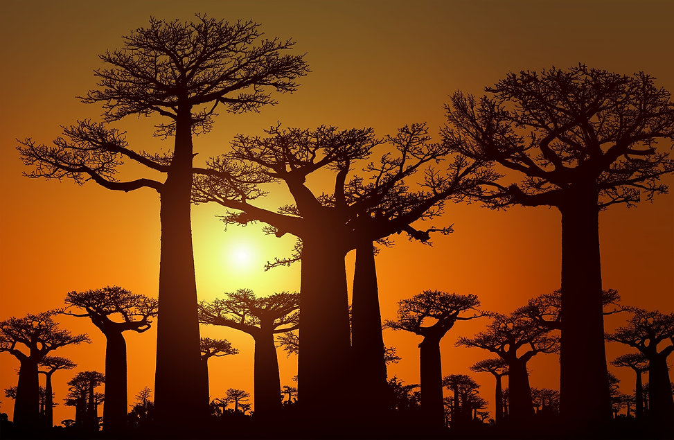 Madagascar trees sunset