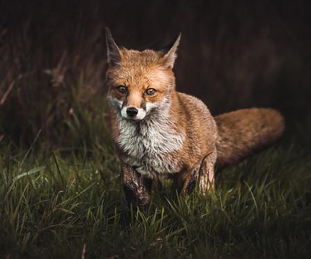 British Wildlife 5 & 6 June 2021