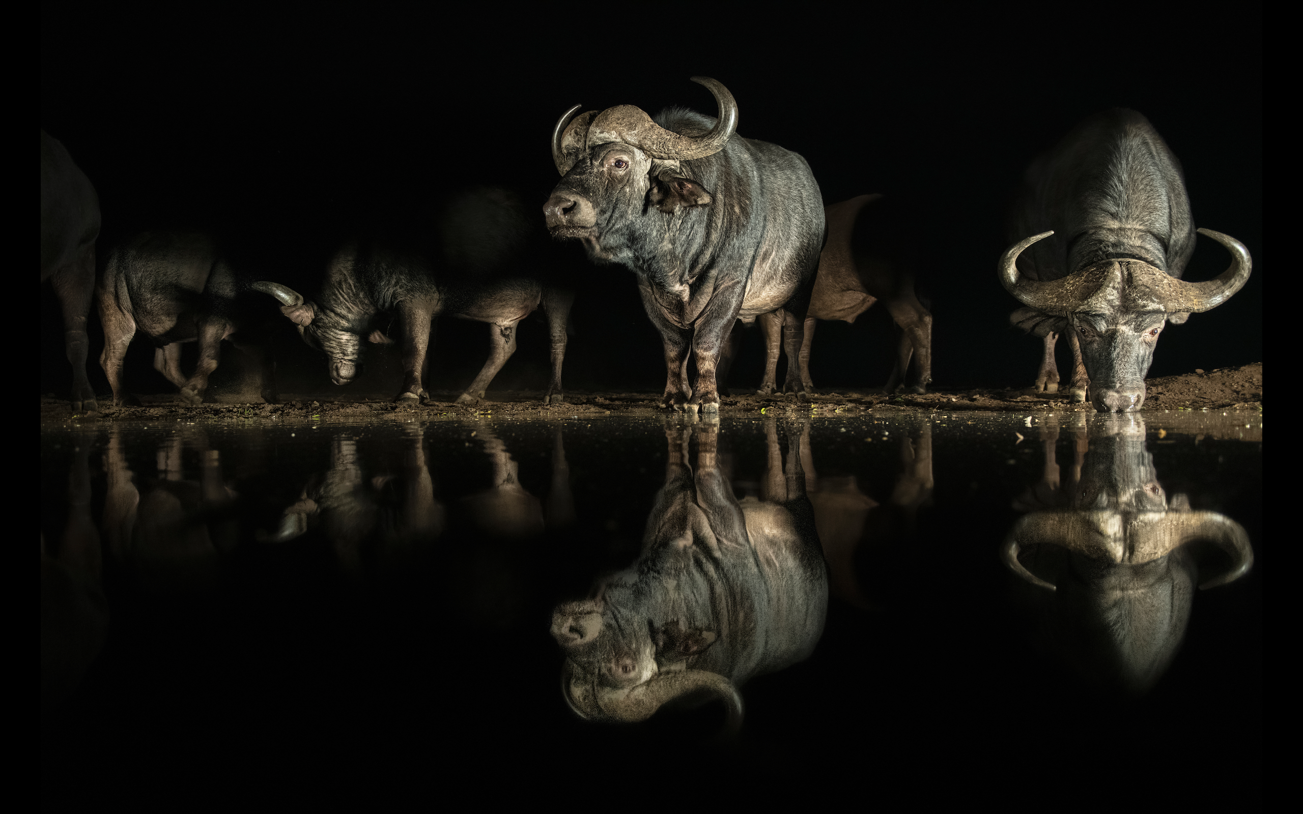 Dark Wall - The Thirstiest Buffalo