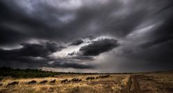 migration rain_DSC7997_WEB