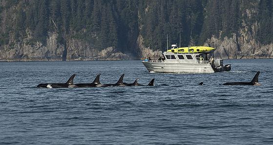 orcas Seward-3724_WEB.jpg