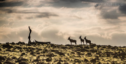 Trai Anfield Enlightened Photographic Safaris Kenya Serian topi-1545_WEB.jpg