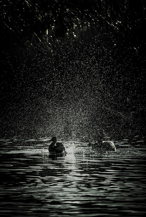 Sunshine & Shower-8919.jpg