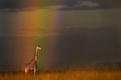 Deb Polay Golden Giraffe at the End of the Rainbow