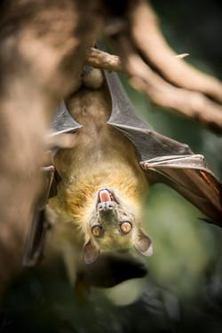 Rwanda bat_WEB-2680.jpg