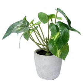 Gisela Graham Faux Philodendron in Pot Small 21cm