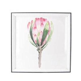 Gisela Graham Acrylic Box Framed Protea Print