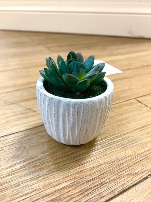 Gisela Graham Mini Succulent in Ceramic Pot 7cm