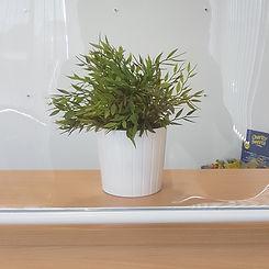 covid plant.jpg