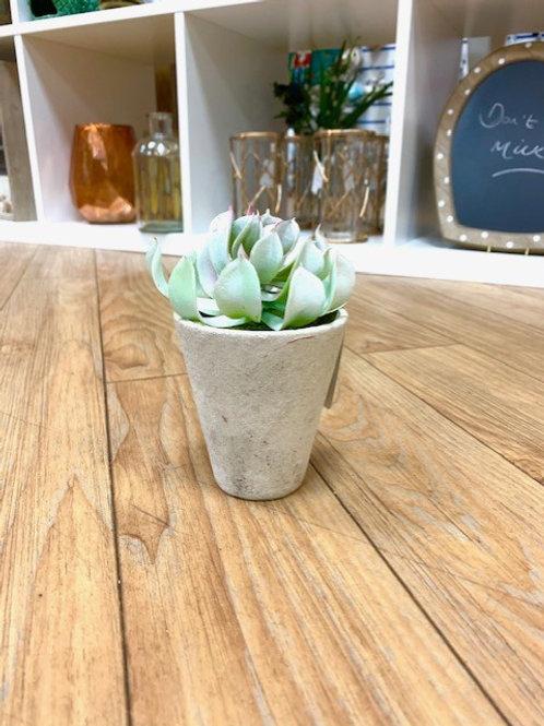 Gisela Graham Faux Succulent in Pot 14cm