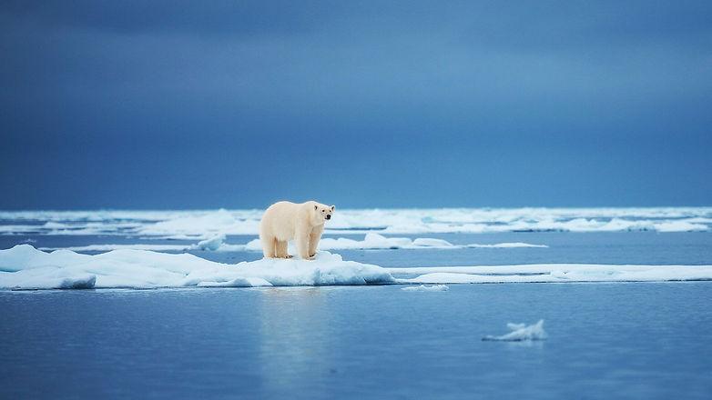 polar-bear-on-ice-in-the-arctic-spitsber