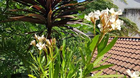 La terrasse fleurie