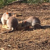 Bettong  Somersby Animal Hospital