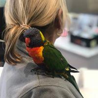 Rainbow Lorikeet  Somersby Animal Hospital