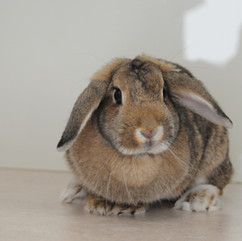 Snickers the rabbit